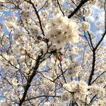 きらきらした春